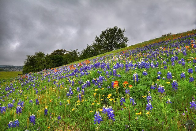 Hill Country Color