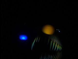 Scary angler fish on finding nemo submarine voyage flickr for Finding nemo angler fish