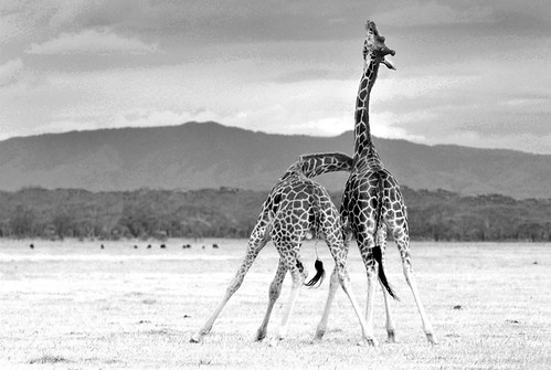 Necking | by C Minihane
