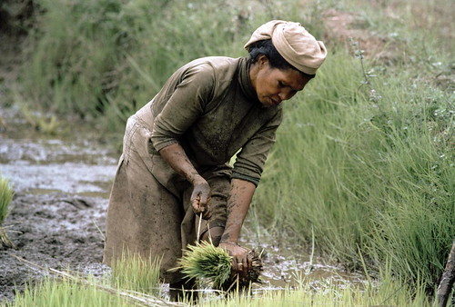 Farming for Development | by United Nations Photo