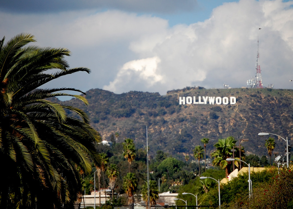 Palm Trees Hollywood Palm Tree And The Hollywood