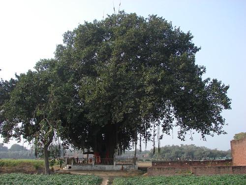 सिरसागंज के प्रसिद्ध मंदिर!