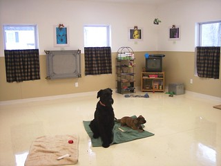 Some Tips For Crate Training And Housebreaking