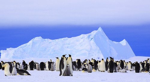 Penguin's Paradise | by Anne Froehlich