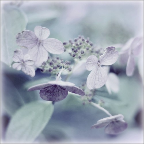 my feminine side sees parts of life in muted pastel hues | by Maureen F.