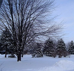 Michigan Winter 2009 | by RebeccasArtCloset
