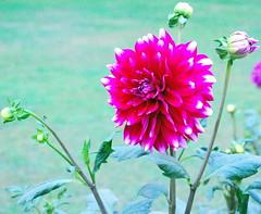 Beautiful Flower by lopamudra bag