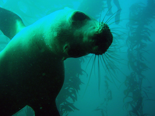 Sea Lion: Up Close and Personal | by NOAA's National Ocean Service