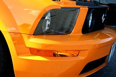 Orange Up-Close by Starlite Wonder Imaging