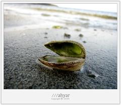 My Shellfish by ///ahyar