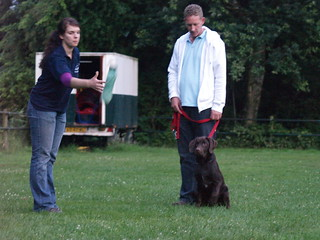 Training Your Dog Tips Your Dog With Thank You For