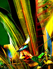 Tropical Bird Song by N. Charneco