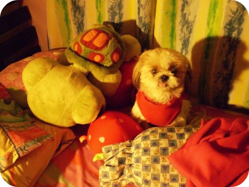 Cujo the Stuffed Toy | by Toni Girl