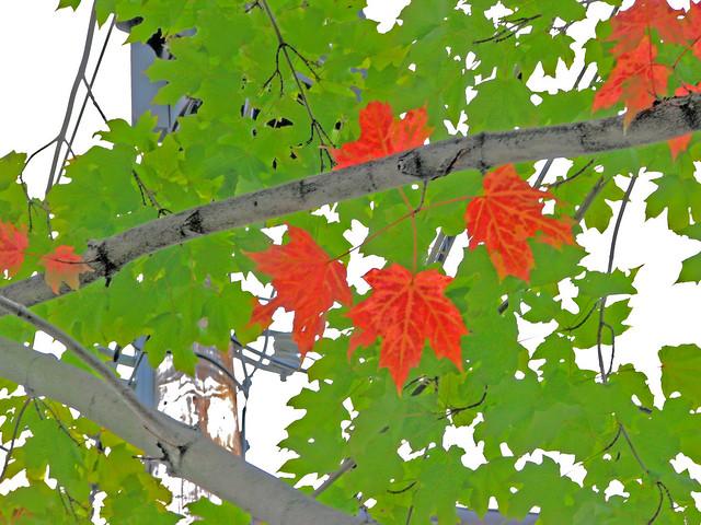 first foliage