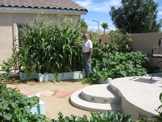 Raised Beds Container Gardening Las Vegas Gardening Flickr