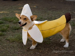 Banana dog | by jeffdillonphotography