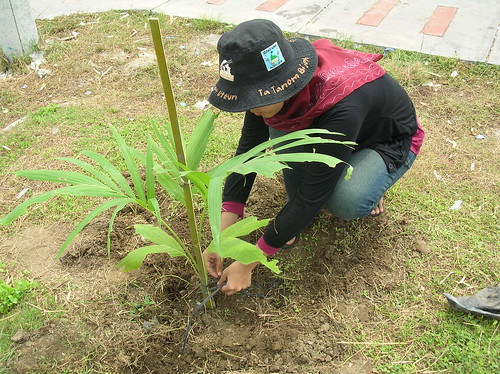 Planting for the future | by East Asia & Pacific on the rise - Blog