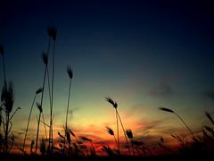 Colours Of The Wind by Argyro Poursanidou