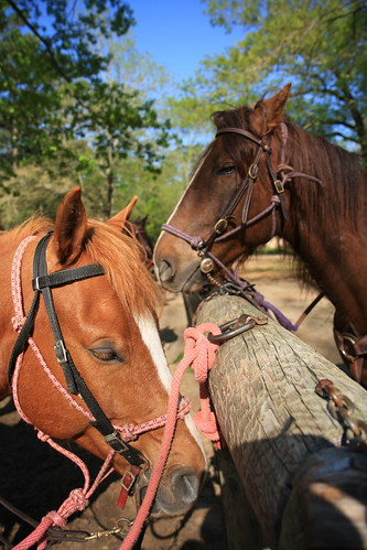 Our horses Rocky & Buddy | by The Noshery