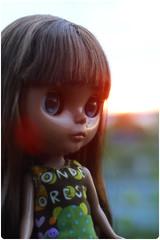 Perdy in sunset by megipupu