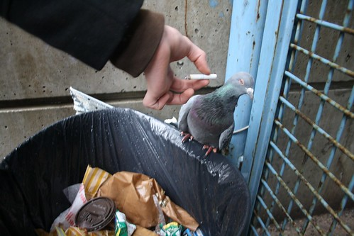 mr. pigeon says no to smoking | by killa p