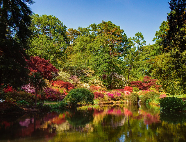 The Azalea Bowl at Exbury Gardens in Hampshire