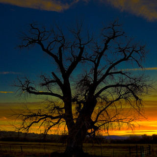 Tree at Sunset | by joorgawt