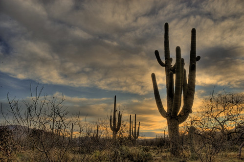CACTUS  DAWN | by Krieger Conradt