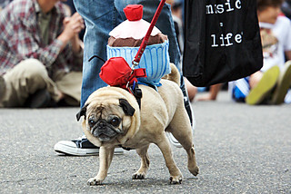 pug with a cherry on top | by modernartefact
