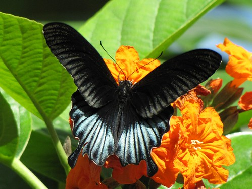 Day at the Butterfly Gardens | by Bobbi Newman
