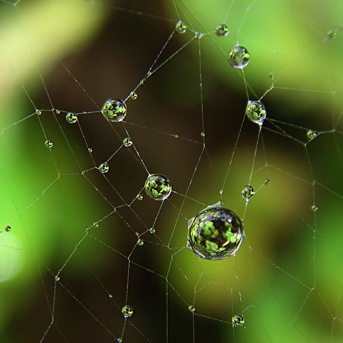 How to Catch Light in a Web | by ecstaticist - evanleeson.com