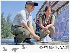 2015栗喉蜂虎繫放-01