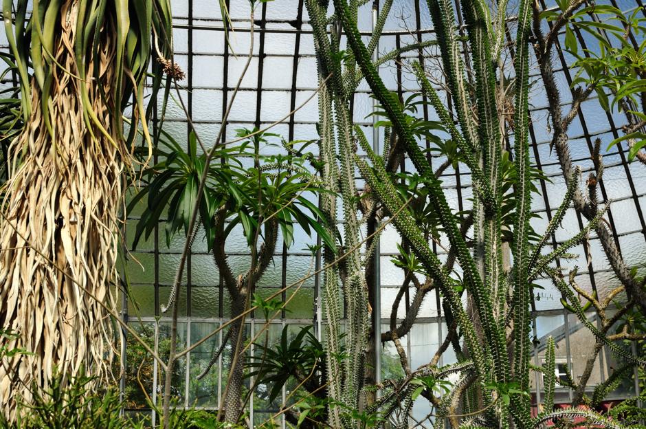 Une serre de plantes arides
