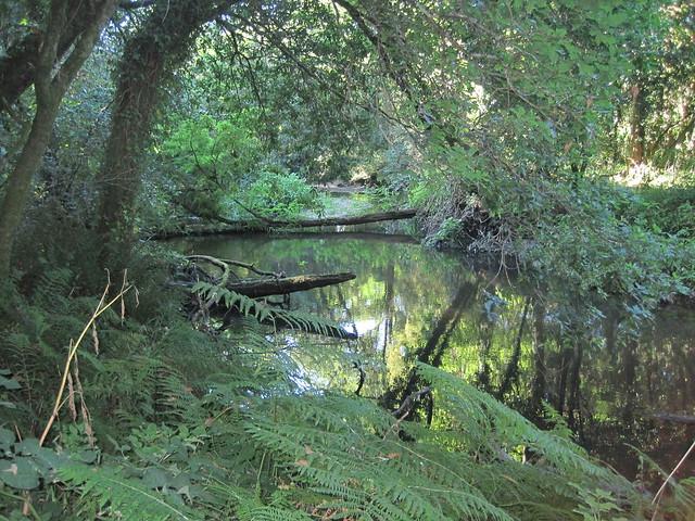Río Sar en la ruta del Castro Lupario y río Sar
