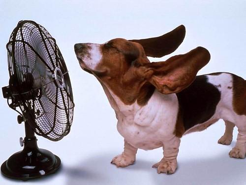 Як перенести спеку без шкоди дляздоров'я