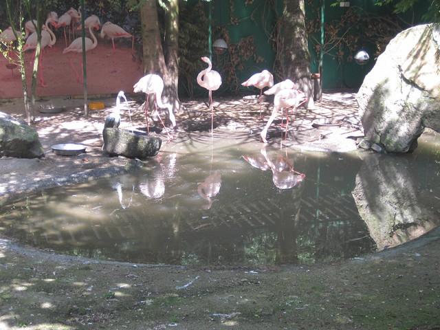 Flamencos en Avifauna Parque Zoológico Ornitológico