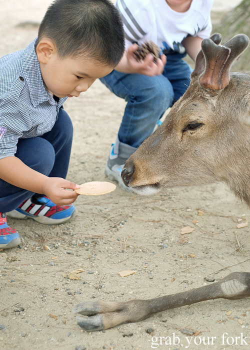 Feeding the wild deer with senbei rice crackers at Nara Park, Japan