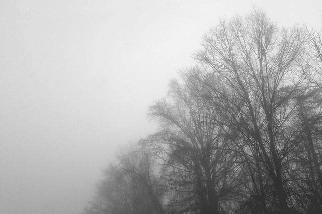 01.15.2014 :: frozen fog