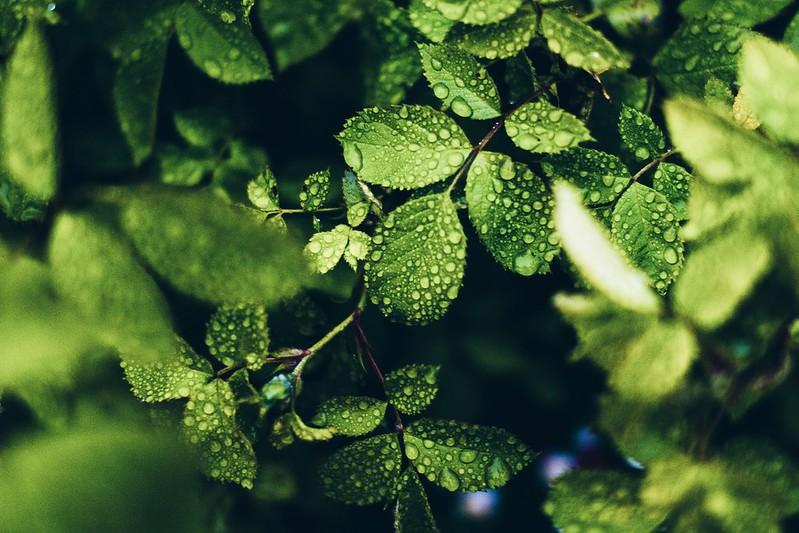 Foto med filter