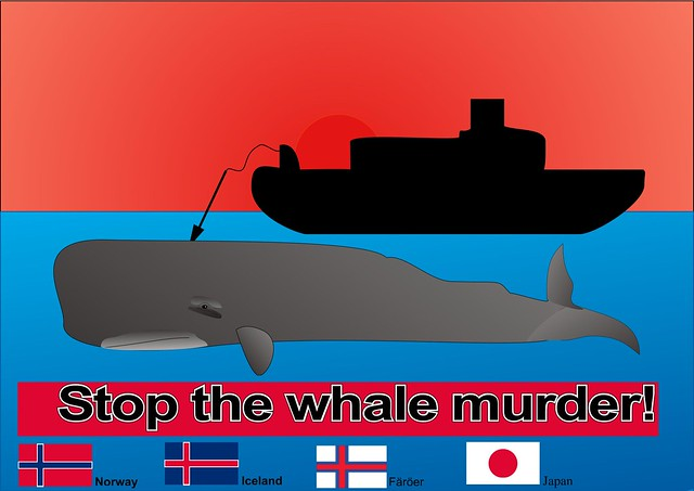Stop the whale murder