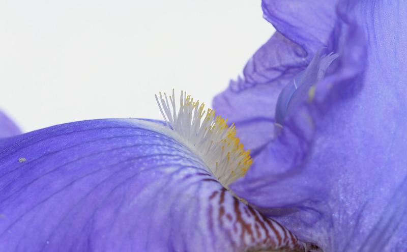 Au coeur de l'iris2