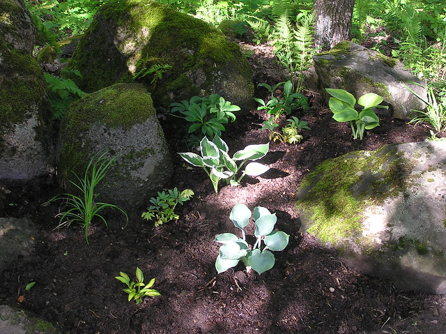New Woodland Bed