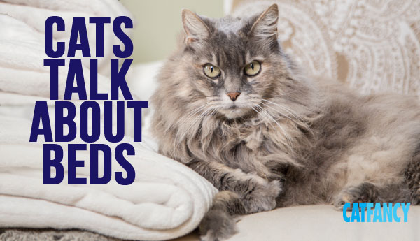 cats-talk-about-beds
