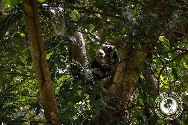 White Faced Capuchin Monkeys Maderas Volcano Ometepe