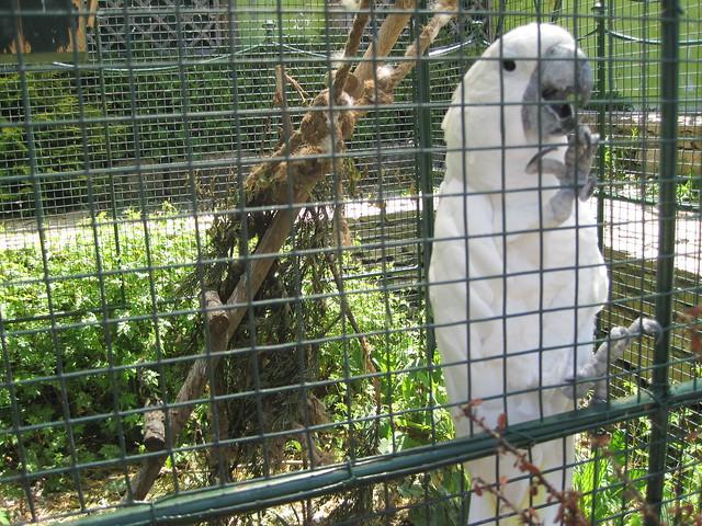 Cacatúa en Avifauna Parque Zoológico Ornitológico