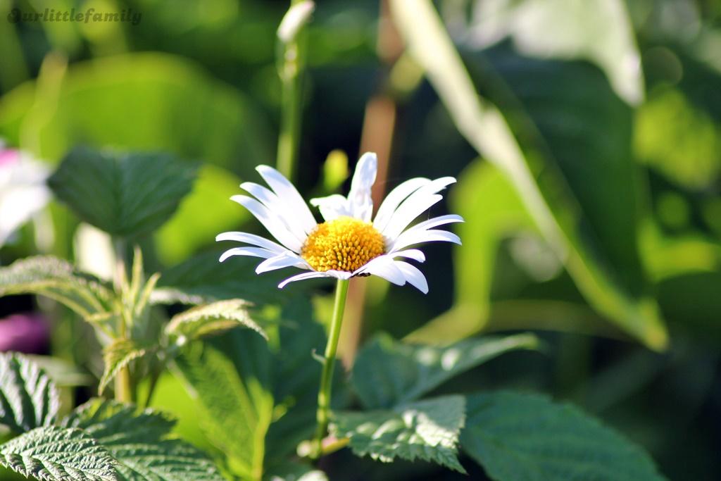 mon jardin 18