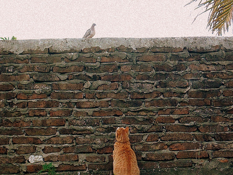 me parecio ver un lindo gatito