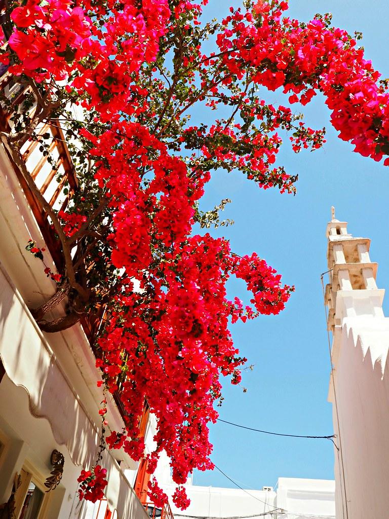 Mykonos pink flowers bougainvillea