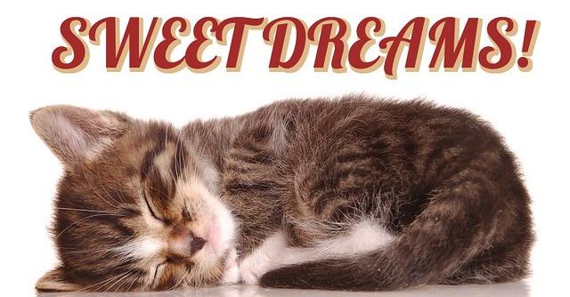 Sweet Dreams, cute kitten sleeping