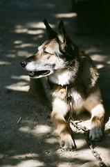 Farm hound by uncoolbob